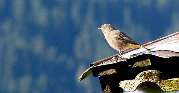 BirdRoof