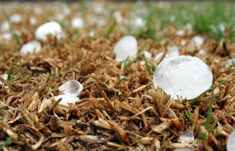 hail-in-yard