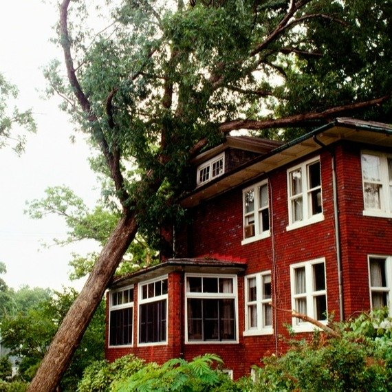 tree-fallen-on-red-house