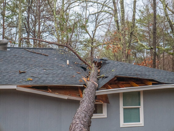 tree-fallen-on-home-damaged-roof